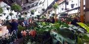Adelaide - Huge Indoor Plant Warehouse Sale - Mystery Location